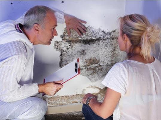 mold inspection man